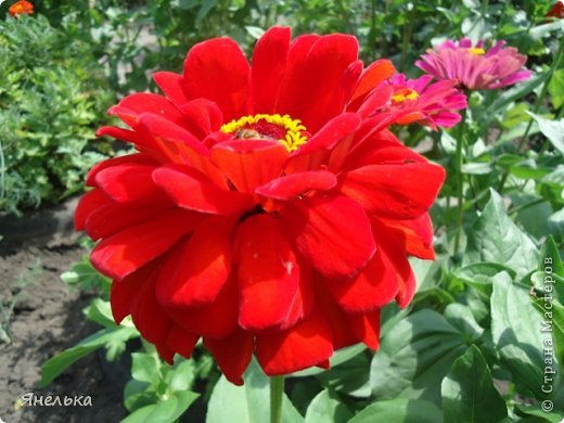 Всем доброго времени суток! Я с очередной порцией своих цветов, в последнее время нет ни сил, ни вдохновения, только мечты о мирной жизни................ Стараюсь заниматься привычными делами, это помогает немного отвлечься и верить, что все будет хорошо........... фото 5