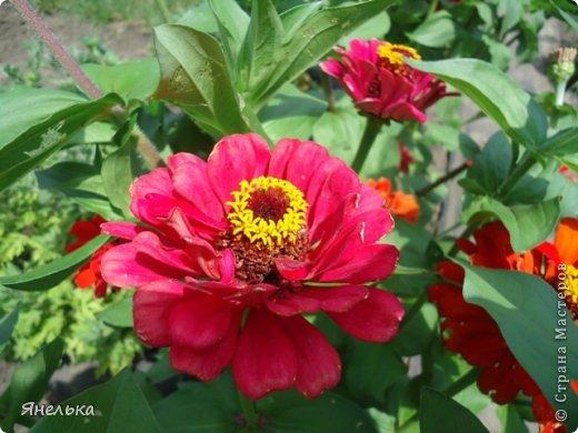 Всем доброго времени суток! Я с очередной порцией своих цветов, в последнее время нет ни сил, ни вдохновения, только мечты о мирной жизни................ Стараюсь заниматься привычными делами, это помогает немного отвлечься и верить, что все будет хорошо........... фото 7