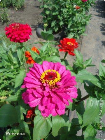 Всем доброго времени суток! Я с очередной порцией своих цветов, в последнее время нет ни сил, ни вдохновения, только мечты о мирной жизни................ Стараюсь заниматься привычными делами, это помогает немного отвлечься и верить, что все будет хорошо........... фото 8