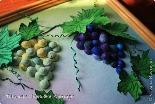 Долго любовалась виноградом   Татьяны Saphir. Вот решила свой вырастить.  фото 5