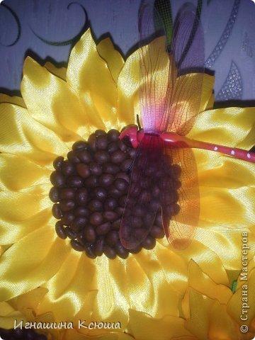 подсолнухи, попытка № 2  ,   высота-55см,  каждый цветок D-18см фото 3