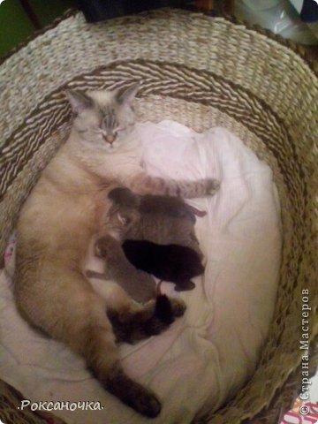 Вот такой заказ посетил меня в марте. Это домик для кошки с котятами. Попросили высотой 30 см, чтобы котята не вылазили.  фото 2