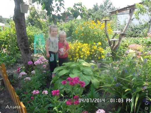 Добрый день Страна Мастеров! Хочу показать Вам свой зеленый уголок, где я выращиваю свои цветы... Это карликовая георгина... фото 4