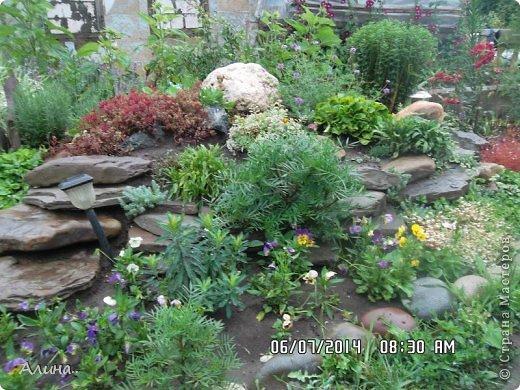 Добрый день Страна Мастеров! Хочу показать Вам свой зеленый уголок, где я выращиваю свои цветы... Это карликовая георгина... фото 2