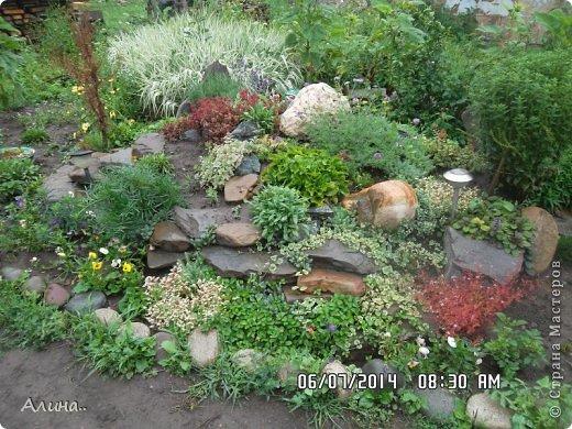 Добрый день Страна Мастеров! Хочу показать Вам свой зеленый уголок, где я выращиваю свои цветы... Это карликовая георгина... фото 3