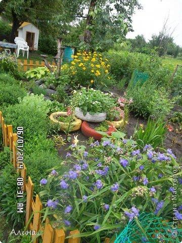 Добрый день Страна Мастеров! Хочу показать Вам свой зеленый уголок, где я выращиваю свои цветы... Это карликовая георгина... фото 6