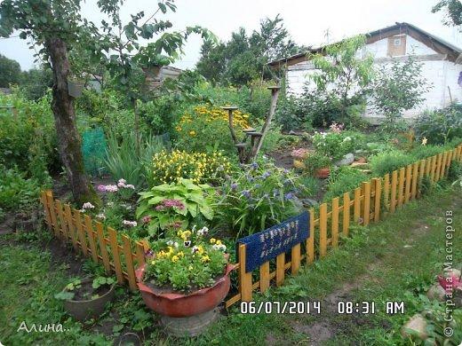 Добрый день Страна Мастеров! Хочу показать Вам свой зеленый уголок, где я выращиваю свои цветы... Это карликовая георгина... фото 7
