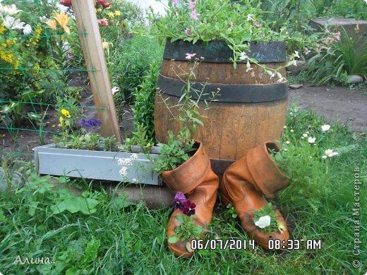 Добрый день Страна Мастеров! Хочу показать Вам свой зеленый уголок, где я выращиваю свои цветы... Это карликовая георгина... фото 10