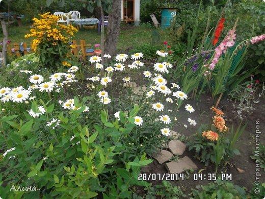 Добрый день Страна Мастеров! Хочу показать Вам свой зеленый уголок, где я выращиваю свои цветы... Это карликовая георгина... фото 15