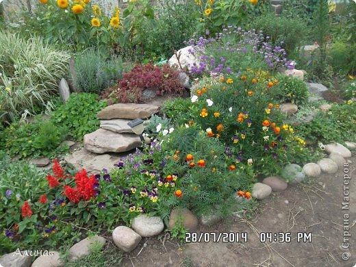 Добрый день Страна Мастеров! Хочу показать Вам свой зеленый уголок, где я выращиваю свои цветы... Это карликовая георгина... фото 18