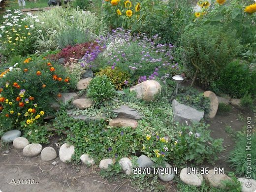 Добрый день Страна Мастеров! Хочу показать Вам свой зеленый уголок, где я выращиваю свои цветы... Это карликовая георгина... фото 19
