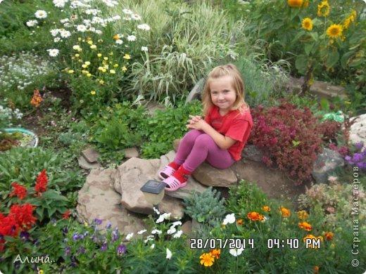 Добрый день Страна Мастеров! Хочу показать Вам свой зеленый уголок, где я выращиваю свои цветы... Это карликовая георгина... фото 23