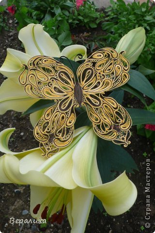 Сегодня я решила показать вам, дорогие мастерицы и мастера,бабочку в рамочке.При ее изготовлении использованы полоски шириной 3мм светло- желтого и коричневого цвета.Фон- бумага для скрапа светло-бежевого цвета с нарисоваными белыми цветочками, которые я сделала объемными с помощью дырокола. фото 18