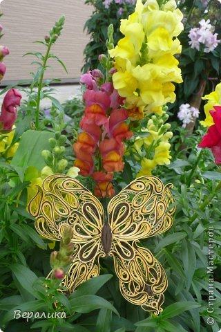 Сегодня я решила показать вам, дорогие мастерицы и мастера,бабочку в рамочке.При ее изготовлении использованы полоски шириной 3мм светло- желтого и коричневого цвета.Фон- бумага для скрапа светло-бежевого цвета с нарисоваными белыми цветочками, которые я сделала объемными с помощью дырокола. фото 17