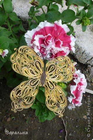 Сегодня я решила показать вам, дорогие мастерицы и мастера,бабочку в рамочке.При ее изготовлении использованы полоски шириной 3мм светло- желтого и коричневого цвета.Фон- бумага для скрапа светло-бежевого цвета с нарисоваными белыми цветочками, которые я сделала объемными с помощью дырокола. фото 20