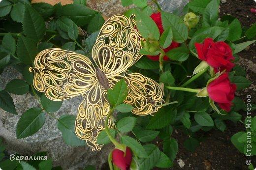 Сегодня я решила показать вам, дорогие мастерицы и мастера,бабочку в рамочке.При ее изготовлении использованы полоски шириной 3мм светло- желтого и коричневого цвета.Фон- бумага для скрапа светло-бежевого цвета с нарисоваными белыми цветочками, которые я сделала объемными с помощью дырокола. фото 21