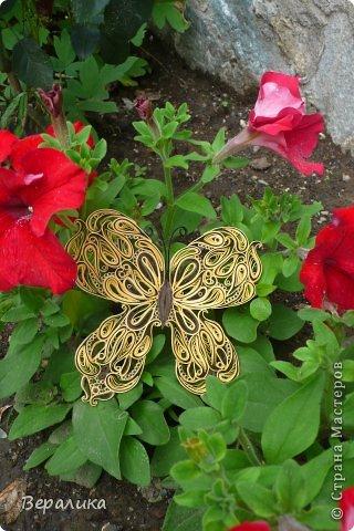Сегодня я решила показать вам, дорогие мастерицы и мастера,бабочку в рамочке.При ее изготовлении использованы полоски шириной 3мм светло- желтого и коричневого цвета.Фон- бумага для скрапа светло-бежевого цвета с нарисоваными белыми цветочками, которые я сделала объемными с помощью дырокола. фото 22
