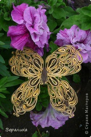 Сегодня я решила показать вам, дорогие мастерицы и мастера,бабочку в рамочке.При ее изготовлении использованы полоски шириной 3мм светло- желтого и коричневого цвета.Фон- бумага для скрапа светло-бежевого цвета с нарисоваными белыми цветочками, которые я сделала объемными с помощью дырокола. фото 23