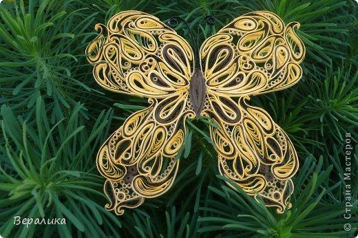 Сегодня я решила показать вам, дорогие мастерицы и мастера,бабочку в рамочке.При ее изготовлении использованы полоски шириной 3мм светло- желтого и коричневого цвета.Фон- бумага для скрапа светло-бежевого цвета с нарисоваными белыми цветочками, которые я сделала объемными с помощью дырокола. фото 24