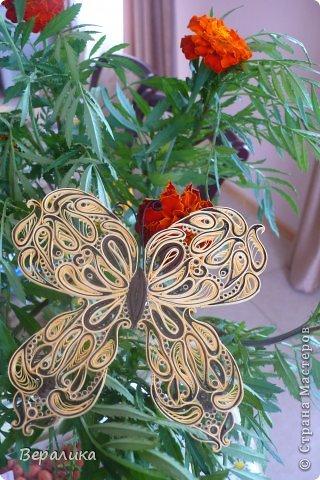 Сегодня я решила показать вам, дорогие мастерицы и мастера,бабочку в рамочке.При ее изготовлении использованы полоски шириной 3мм светло- желтого и коричневого цвета.Фон- бумага для скрапа светло-бежевого цвета с нарисоваными белыми цветочками, которые я сделала объемными с помощью дырокола. фото 25
