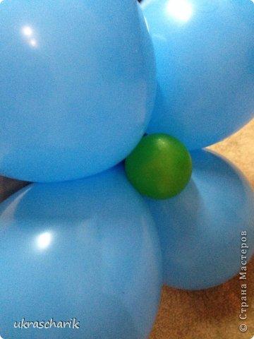 Добрый день! Сегодня мк еще одной фигурки...для тех..кто любит радовать детей))) к слову подарки из воздушных шаров любят и дети и взрослые!)) Делать будем мишку или еще одну собачку...кому как фантазия позволяет))) Для работы нам понадобятся: - 6 шарика 12 дюймовых голубого цвета...или 5 шариков и один линколун ( об этом чуть позже) - 3 шарика 5 дюймовых белых - один пятидюймовый шарик черный для носика - 4 голубых 5 дюймовых шарика - 2 шдм 260 ( шдм-шары для моделирования...в простонародье шарики сосиски))) для ручек - один маленький шарик для грузика любого цвета - перманентные маркеры бусинки...(в моем случае витаминки ревит....по моему мнению это идеальный вариант...даже если ребенок прокусит фигурку...что в моей практике случалось...бусинка-витаминка...не причинит ему вреда) - обрезки шдм - пара рук и отличное настроение..это как обычно))) фото 3