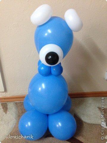 Добрый день! Сегодня мк еще одной фигурки...для тех..кто любит радовать детей))) к слову подарки из воздушных шаров любят и дети и взрослые!)) Делать будем мишку или еще одну собачку...кому как фантазия позволяет))) Для работы нам понадобятся: - 6 шарика 12 дюймовых голубого цвета...или 5 шариков и один линколун ( об этом чуть позже) - 3 шарика 5 дюймовых белых - один пятидюймовый шарик черный для носика - 4 голубых 5 дюймовых шарика - 2 шдм 260 ( шдм-шары для моделирования...в простонародье шарики сосиски))) для ручек - один маленький шарик для грузика любого цвета - перманентные маркеры бусинки...(в моем случае витаминки ревит....по моему мнению это идеальный вариант...даже если ребенок прокусит фигурку...что в моей практике случалось...бусинка-витаминка...не причинит ему вреда) - обрезки шдм - пара рук и отличное настроение..это как обычно))) фото 12