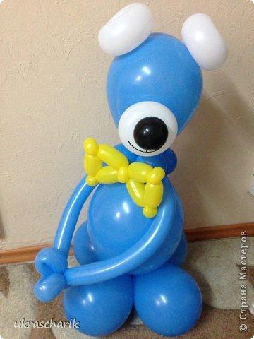 Добрый день! Сегодня мк еще одной фигурки...для тех..кто любит радовать детей))) к слову подарки из воздушных шаров любят и дети и взрослые!)) Делать будем мишку или еще одну собачку...кому как фантазия позволяет))) Для работы нам понадобятся: - 6 шарика 12 дюймовых голубого цвета...или 5 шариков и один линколун ( об этом чуть позже) - 3 шарика 5 дюймовых белых - один пятидюймовый шарик черный для носика - 4 голубых 5 дюймовых шарика - 2 шдм 260 ( шдм-шары для моделирования...в простонародье шарики сосиски))) для ручек - один маленький шарик для грузика любого цвета - перманентные маркеры бусинки...(в моем случае витаминки ревит....по моему мнению это идеальный вариант...даже если ребенок прокусит фигурку...что в моей практике случалось...бусинка-витаминка...не причинит ему вреда) - обрезки шдм - пара рук и отличное настроение..это как обычно))) фото 14