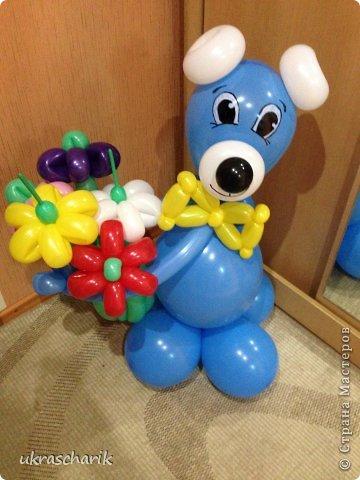 Добрый день! Сегодня мк еще одной фигурки...для тех..кто любит радовать детей))) к слову подарки из воздушных шаров любят и дети и взрослые!)) Делать будем мишку или еще одну собачку...кому как фантазия позволяет))) Для работы нам понадобятся: - 6 шарика 12 дюймовых голубого цвета...или 5 шариков и один линколун ( об этом чуть позже) - 3 шарика 5 дюймовых белых - один пятидюймовый шарик черный для носика - 4 голубых 5 дюймовых шарика - 2 шдм 260 ( шдм-шары для моделирования...в простонародье шарики сосиски))) для ручек - один маленький шарик для грузика любого цвета - перманентные маркеры бусинки...(в моем случае витаминки ревит....по моему мнению это идеальный вариант...даже если ребенок прокусит фигурку...что в моей практике случалось...бусинка-витаминка...не причинит ему вреда) - обрезки шдм - пара рук и отличное настроение..это как обычно))) фото 15