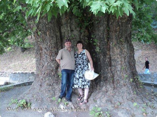 """Город Телави расположен в сердце Кахетии – исторической области Восточной Грузии, находящейся в долинах рек Иори и Алазани. Телави расположен в красивейшей Алазанской долине, на склоне Циви-Гомборского хребта. Город находится на высоте 490 м над уровнем моря, поэтому воздух здесь свеж и прозрачен. Свою прогулку по Телави мы бы хотели начать с этого прекрасного дерева, которому уже больше 800 лет! Его снимали в """"Мимино""""! Да и само название города Телави походит от """"тела"""" - """"дерево""""!"""