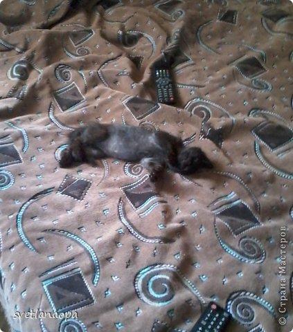 Вот моя маленькая кусявка-царапка Мася, её где-то месяца два.Это первая такая кошка , которая не даёт себя погладить, сразу начинает кусаться-царапаться. фото 3