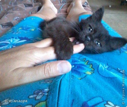 Вот моя маленькая кусявка-царапка Мася, её где-то месяца два.Это первая такая кошка , которая не даёт себя погладить, сразу начинает кусаться-царапаться. фото 6