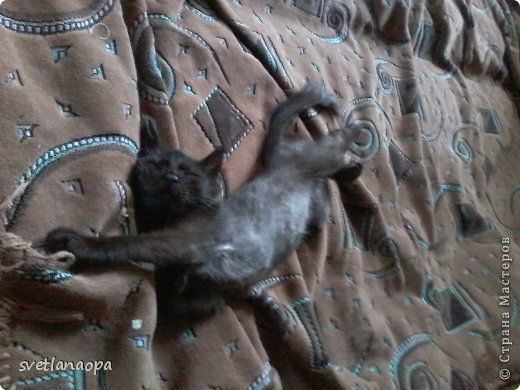 Вот моя маленькая кусявка-царапка Мася, её где-то месяца два.Это первая такая кошка , которая не даёт себя погладить, сразу начинает кусаться-царапаться. фото 11