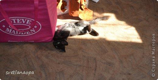 Вот моя маленькая кусявка-царапка Мася, её где-то месяца два.Это первая такая кошка , которая не даёт себя погладить, сразу начинает кусаться-царапаться. фото 5