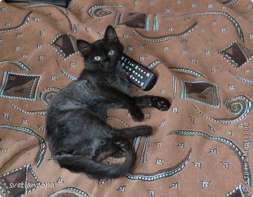 Вот моя маленькая кусявка-царапка Мася, её где-то месяца два.Это первая такая кошка , которая не даёт себя погладить, сразу начинает кусаться-царапаться. фото 7