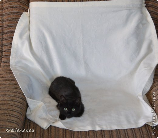 Вот моя маленькая кусявка-царапка Мася, её где-то месяца два.Это первая такая кошка , которая не даёт себя погладить, сразу начинает кусаться-царапаться. фото 8