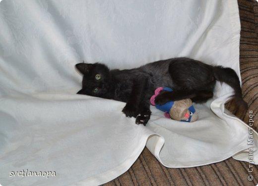 Вот моя маленькая кусявка-царапка Мася, её где-то месяца два.Это первая такая кошка , которая не даёт себя погладить, сразу начинает кусаться-царапаться. фото 10