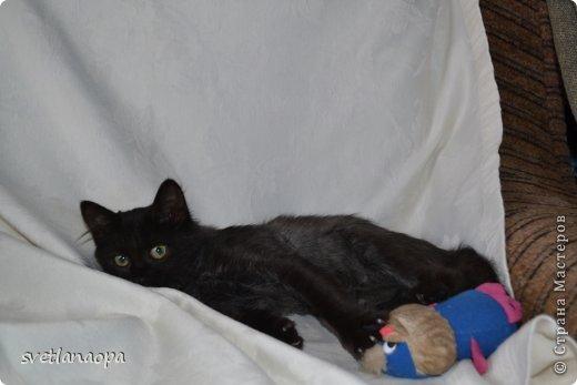 Вот моя маленькая кусявка-царапка Мася, её где-то месяца два.Это первая такая кошка , которая не даёт себя погладить, сразу начинает кусаться-царапаться. фото 9