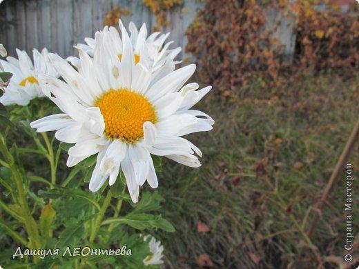 Всем доброго времени суток. Я начинаю свой фоторепортаж. И первая фотография - петух, который бродил в кустах. фото 17