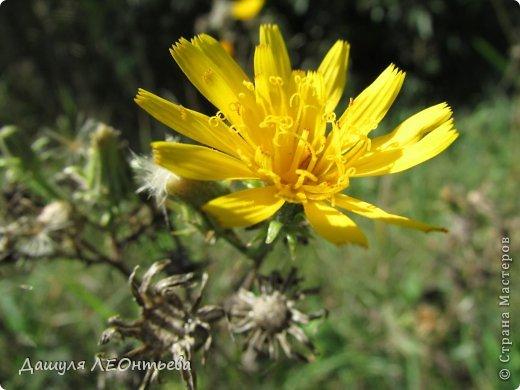 Всем доброго времени суток. Я начинаю свой фоторепортаж. И первая фотография - петух, который бродил в кустах. фото 21