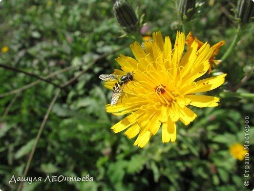 Всем доброго времени суток. Я начинаю свой фоторепортаж. И первая фотография - петух, который бродил в кустах. фото 22