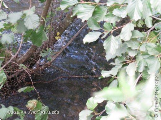 Всем доброго времени суток. Я начинаю свой фоторепортаж. И первая фотография - петух, который бродил в кустах. фото 13