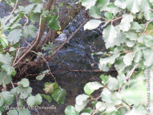 Всем доброго времени суток. Я начинаю свой фоторепортаж. И первая фотография - петух, который бродил в кустах. фото 14