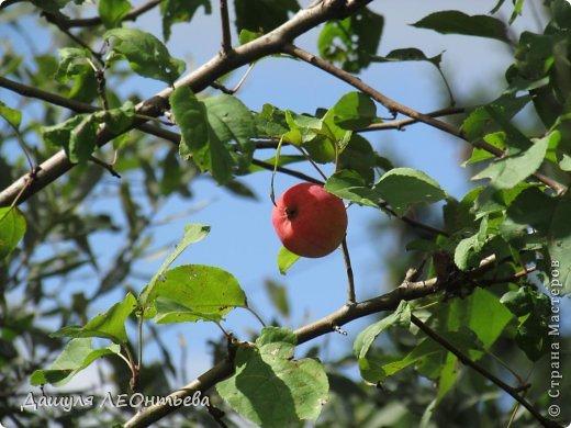 Всем доброго времени суток. Я начинаю свой фоторепортаж. И первая фотография - петух, который бродил в кустах. фото 9