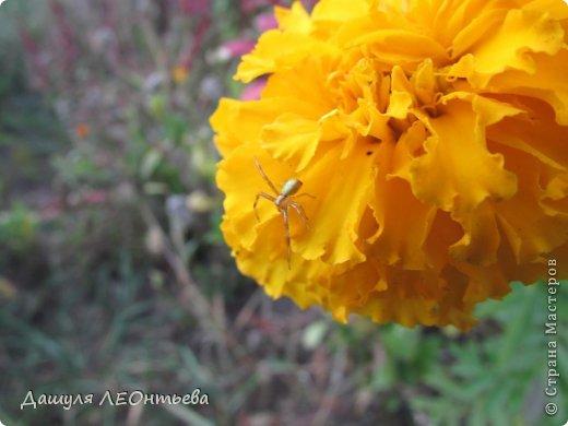 Всем доброго времени суток. Я начинаю свой фоторепортаж. И первая фотография - петух, который бродил в кустах. фото 29