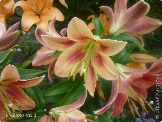 Этим летом наслаждаться садом моих родителей довелось мне частично, зато мои дети налюбовались им вдоволь фото 13