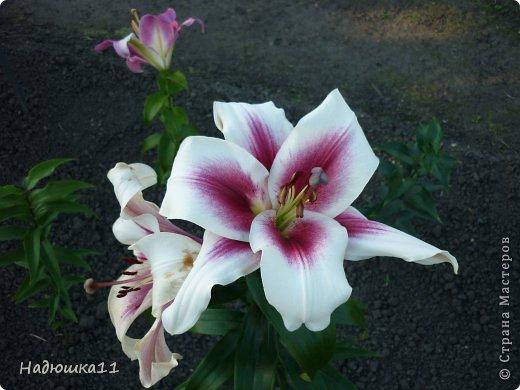Этим летом наслаждаться садом моих родителей довелось мне частично, зато мои дети налюбовались им вдоволь фото 19