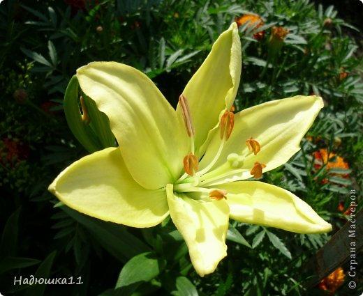 Этим летом наслаждаться садом моих родителей довелось мне частично, зато мои дети налюбовались им вдоволь фото 21
