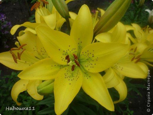 Этим летом наслаждаться садом моих родителей довелось мне частично, зато мои дети налюбовались им вдоволь фото 22