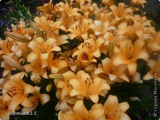 Этим летом наслаждаться садом моих родителей довелось мне частично, зато мои дети налюбовались им вдоволь фото 27