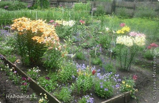Этим летом наслаждаться садом моих родителей довелось мне частично, зато мои дети налюбовались им вдоволь фото 28